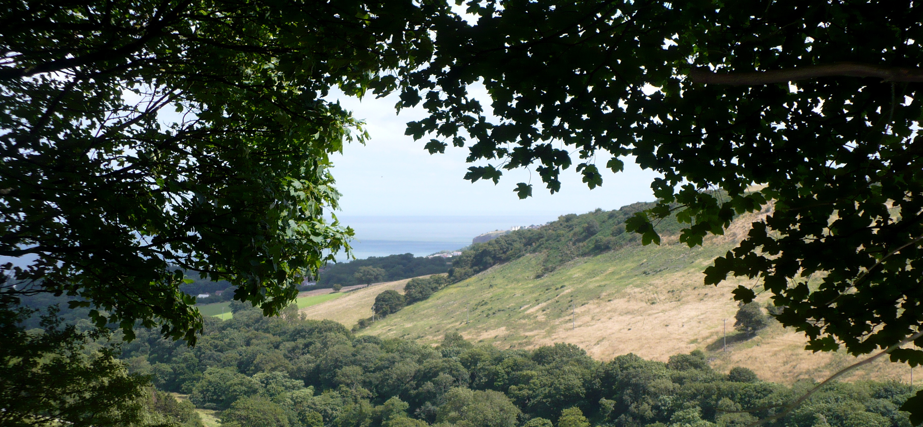 The View, The Site, Colwyn Bay Forest School